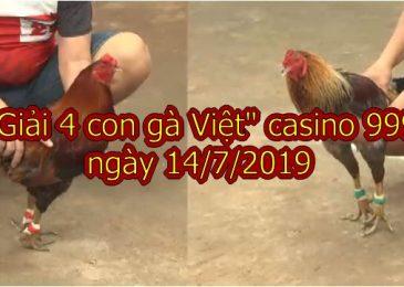 """Video đá gà Thomo """"Giải 4 con gà Việt"""" ngày 14/7/2019"""