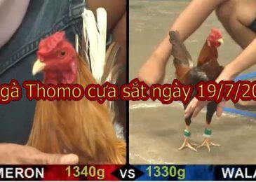 Cập nhật Đá gà Campuchia thứ 6 ngày 19/7/2019