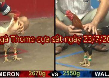 Xem video Đá Gà Campuchia thứ 3 ngày 23/7/2019