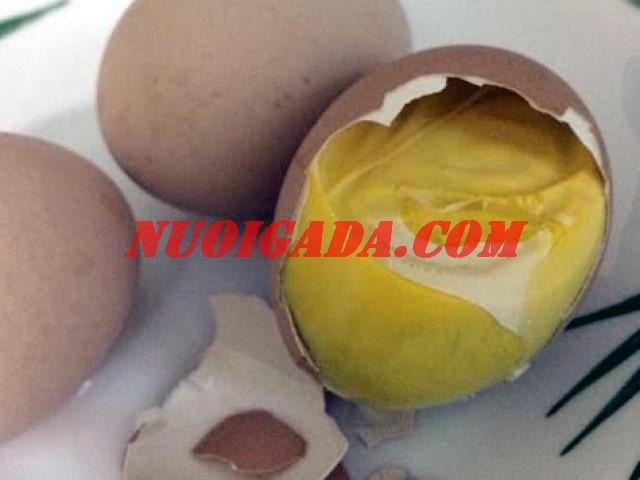 trứng gà ấp dở